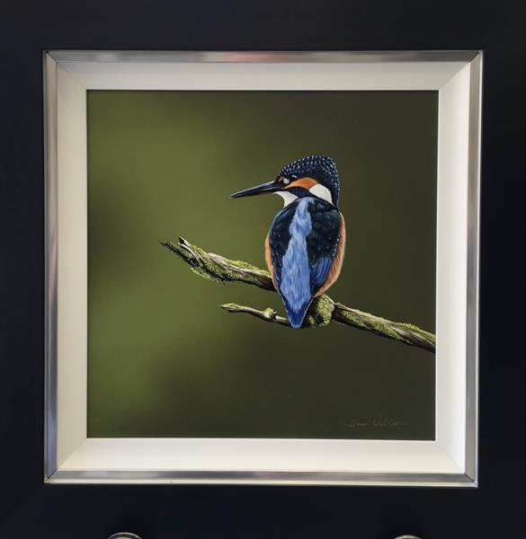 River Avon kingfisher  by dean walker