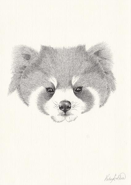 Red Panda by Kelsey Emblow