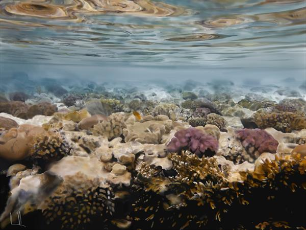The shallows by Kevin Pyle