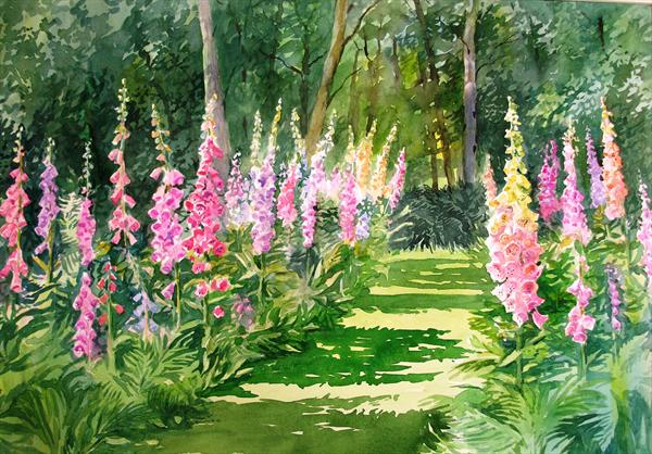 Foxgloves At Sizewell Woods