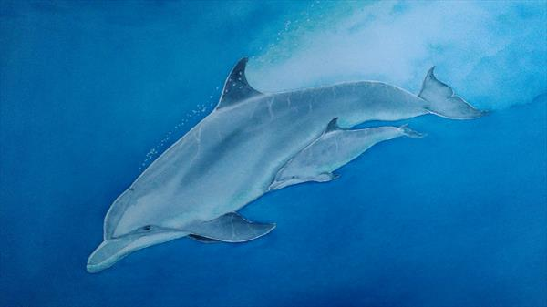 Bottlenose Dolphins by ANDREW HASLER