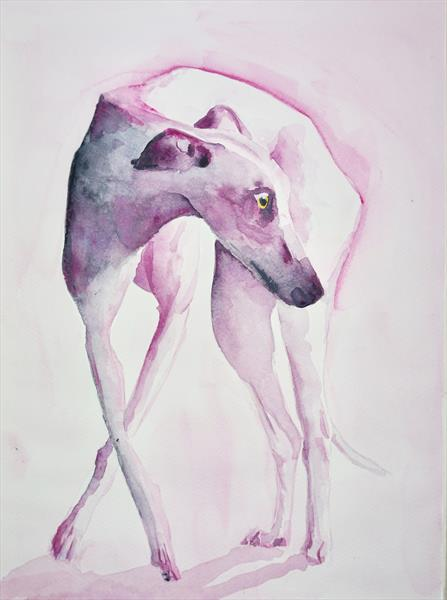Elegant Greyhound