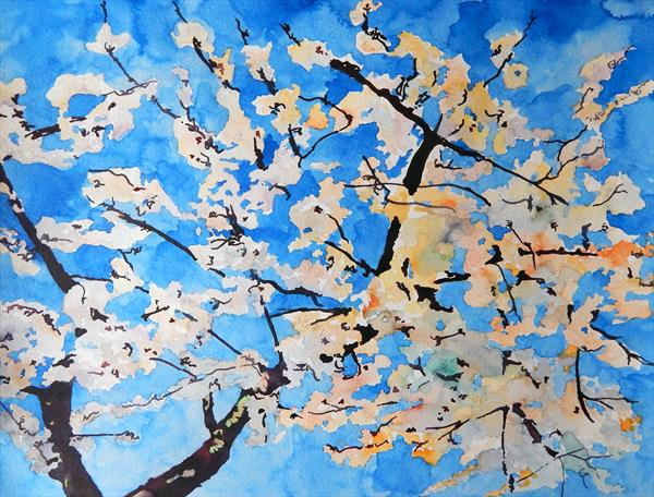 Watercolour Cherry blossom study by Richard Freer