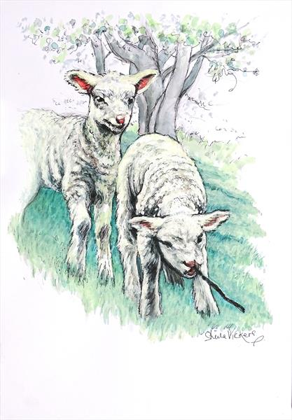 Playfull Lambs by Sheila Vickers