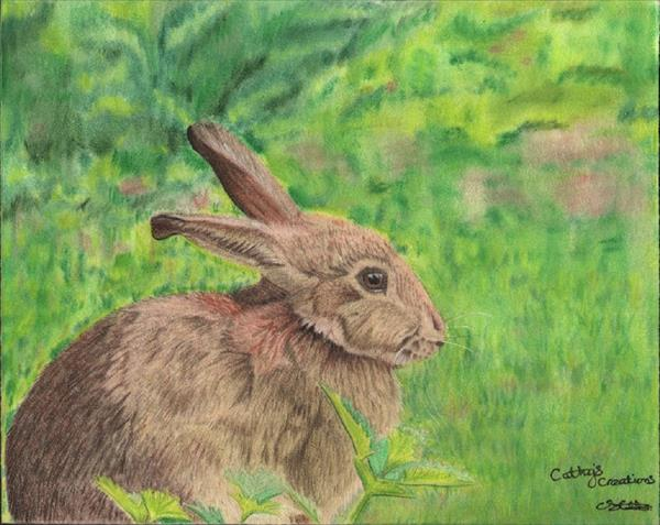 Soft bunny rabbit by Cathy Settle