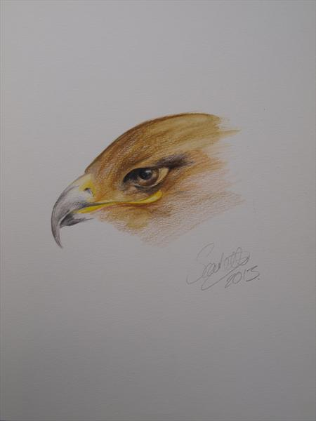 Eagle by Steph Scarlett