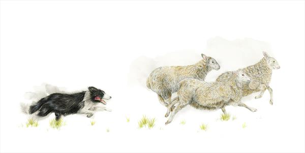 All In A Days Work - Sheep Dog  by Leigh  Townsend