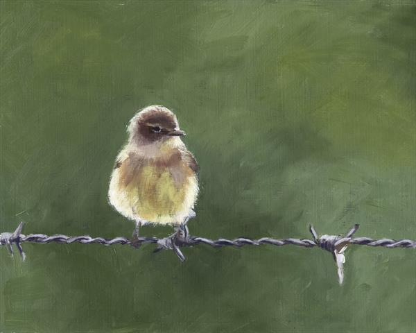Chiffchaff on Wire 1 by John Crabb