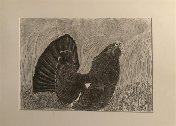 Scottish Capercaillie  by Samantha King