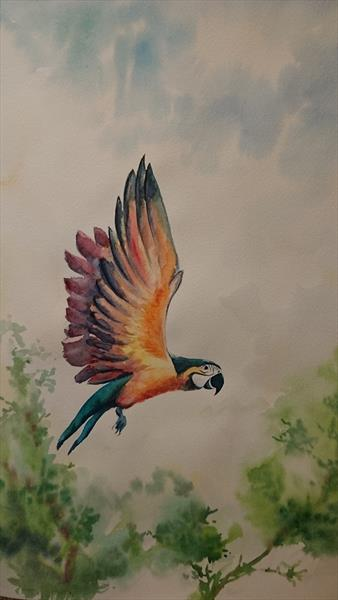 Rainbow parrot fly by Elena Haines