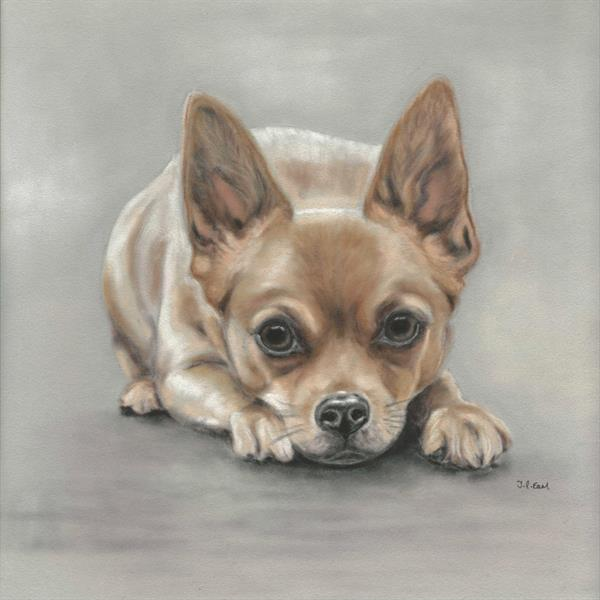 Chihuahua - Paws for thought by Tracey Earl