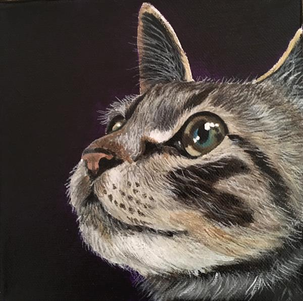 Inquisitive Tabby 6x6