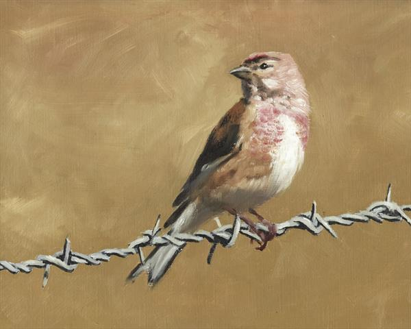 Linnet on Wire by John Crabb