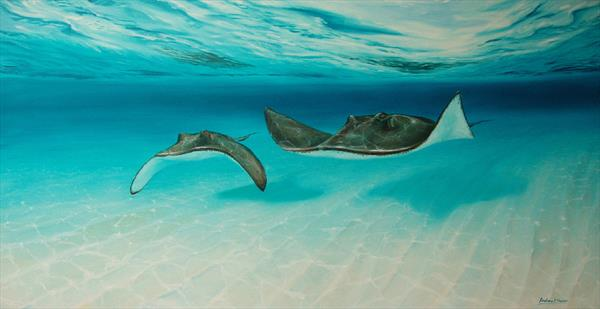 Sting rays by ANDREW HASLER