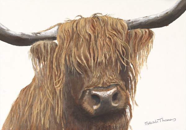 Highland Bull by Sarah Thomas