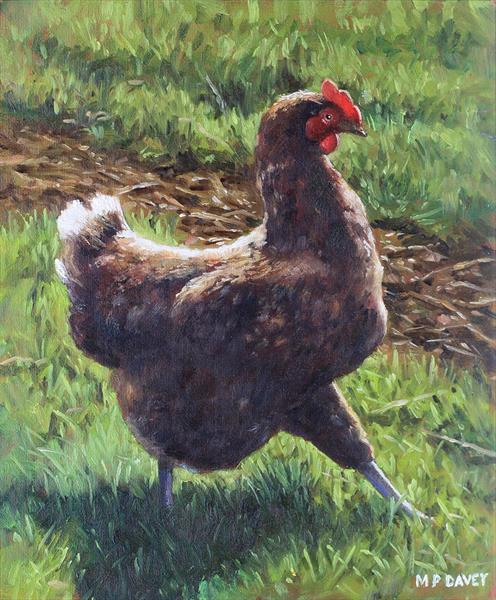 Single Chicken Walking Around On Grass by Martin  Davey