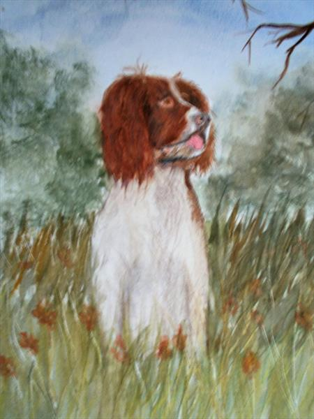 Watching and waiting.Springer in watercolour by Trevor Partridge