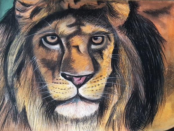 Lion by Christopher Evans