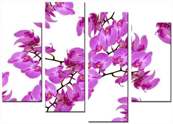 Orchid 8 4 Set Shades of Pink by Mike Shenton
