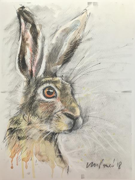 Hare #33 - Charcoal, ink & watercolour Hare drawing  by Luci Power