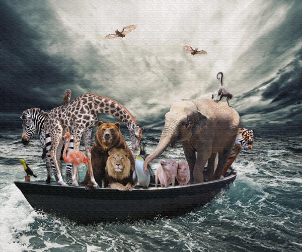 Noah's Ark by Angela O'Donnell