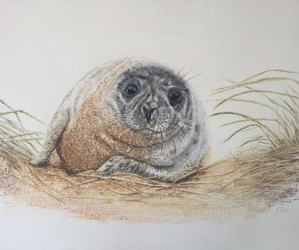 Seal in the sand dunes by Rachel Tappin