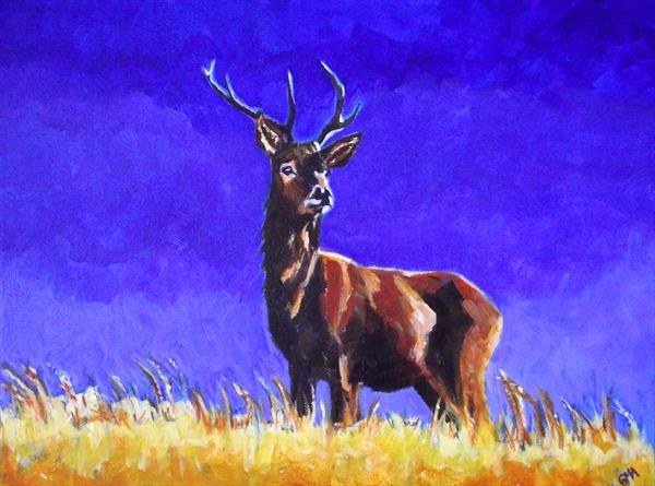 Stag on look-out duty by Gill Aitken