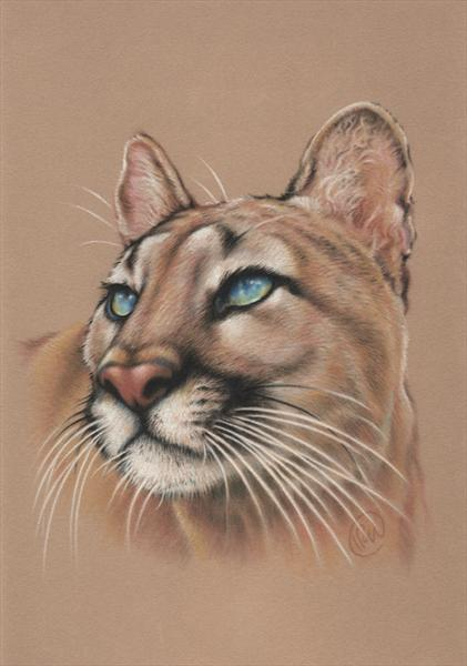 Puma, Mountain Lion by Ian R Ward