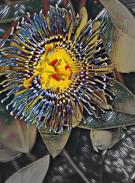 Passion Flower II by Michael Aaron