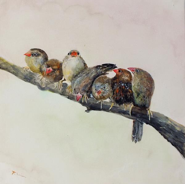 Finches by Tracey Unwin