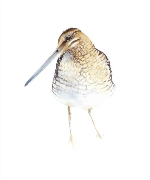 Snipe Bird by Tracey Hollis Rowe