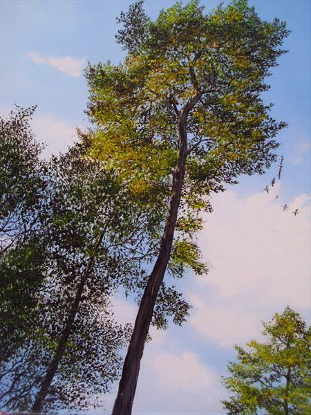 Look Up To The Sky by Hazel Thomson