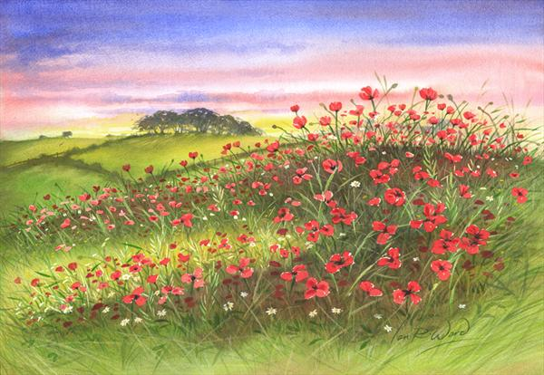 Sunset Poppies by Ian R Ward