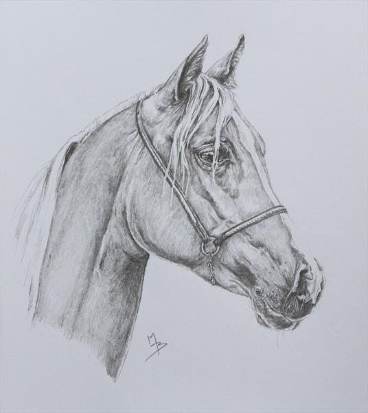 Horse Portrait (2) by Mark Barrable