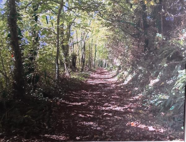 Woodland bridle path by MARK LEARY