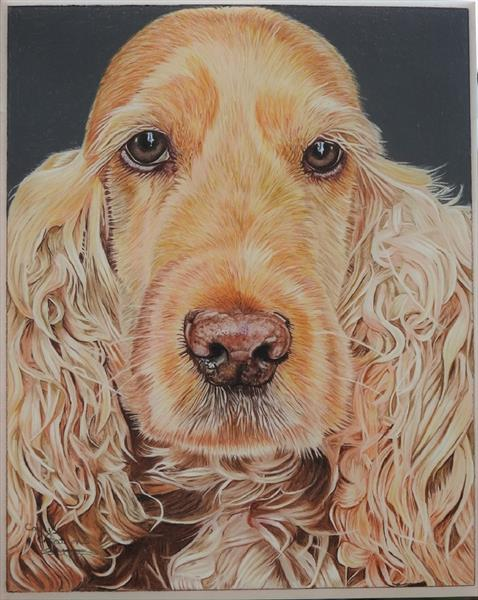 Susie the Cocker Spaniel by Cathy Settle