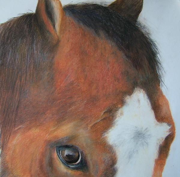Horses Head Study 3 by Gary Kitchen