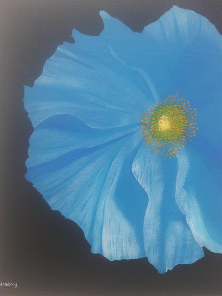 Blue Poppy by Will Hobday