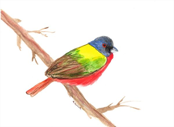 Painted bunting bird by Monika Howarth