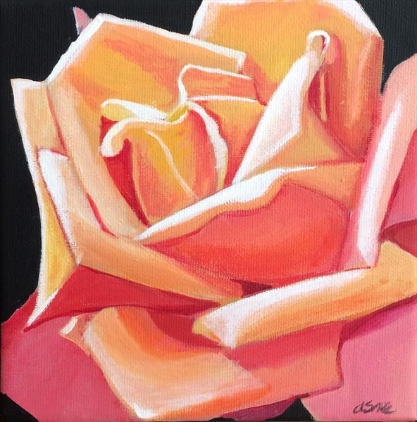 Peachy rose by Andrew Snee