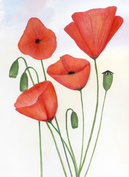 Poppies 5 by Paul Oughton