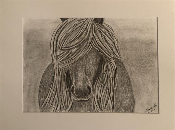 Scottish Shetland Pony by Samantha King
