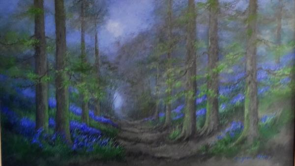 Bluebell Wood by Suzanne  Haimes