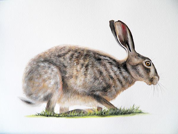 Hare by Sarah Featherstone
