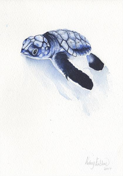 Baby Sea Turtle by Kelsey Emblow