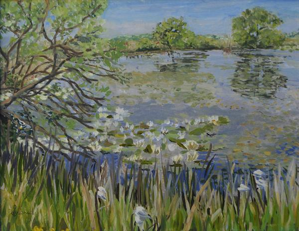 Willows Drinking Broad Pool, Gower by Sue Mann