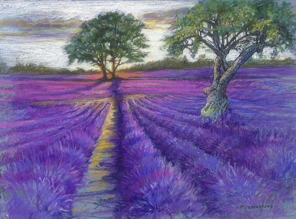 Evening sun over Lavender fields (Limited edition Print large) by Patricia Clements