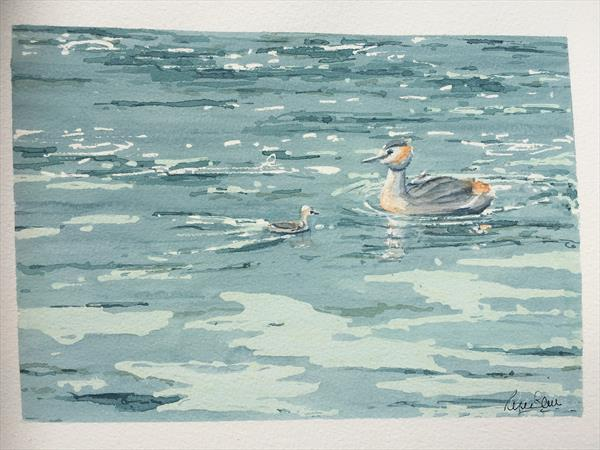 Grebe with chicks by Peter Blake