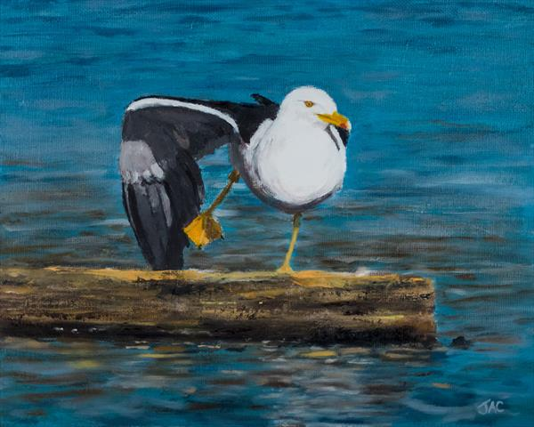 Lesser Black Backed Gull on Plank by John Crabb