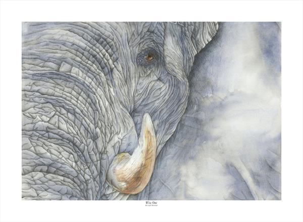 Wise One - Elephant  by Leigh  Townsend